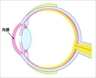 角膜イメージ