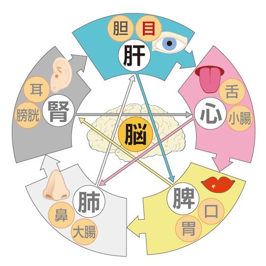 漢方と目のイメージ